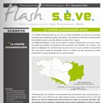 Flash SEVE n°31