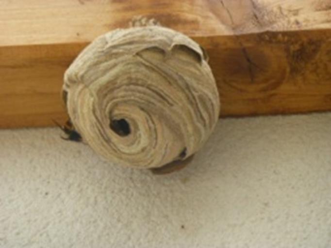 nid-primaire