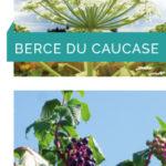 Devenez «observateur plantes invasives»